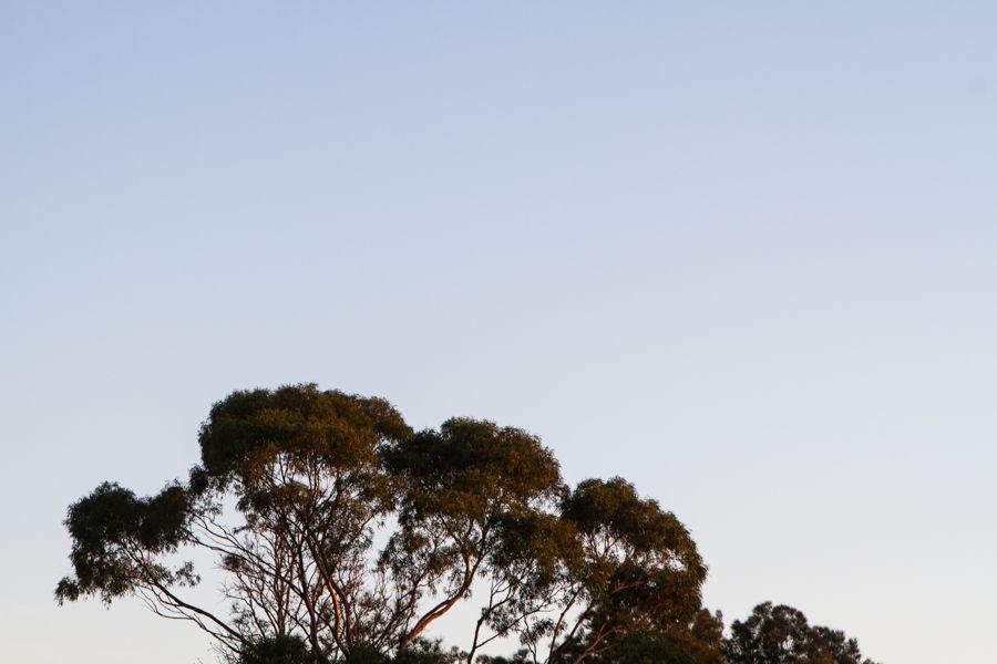 Treetops.