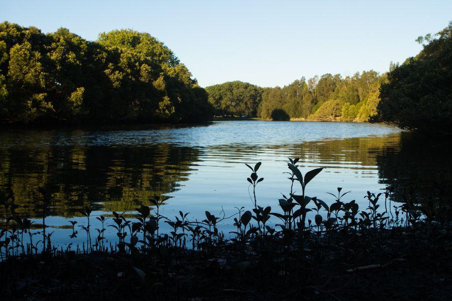 Cooks River.