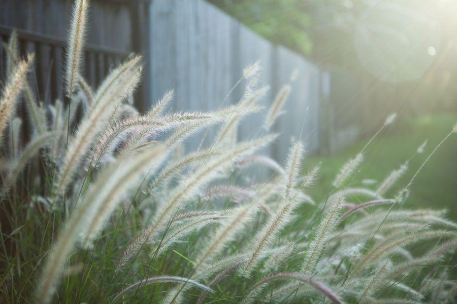 Backlit grass.